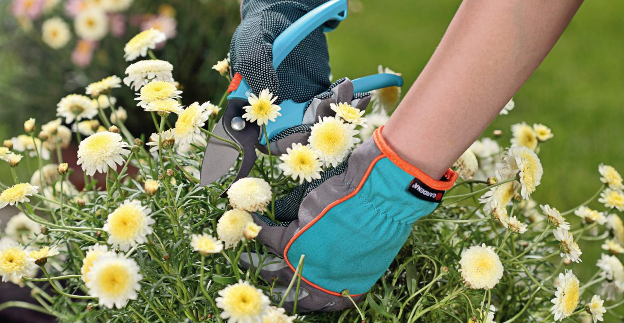 Gardena Schere und Handschuhe